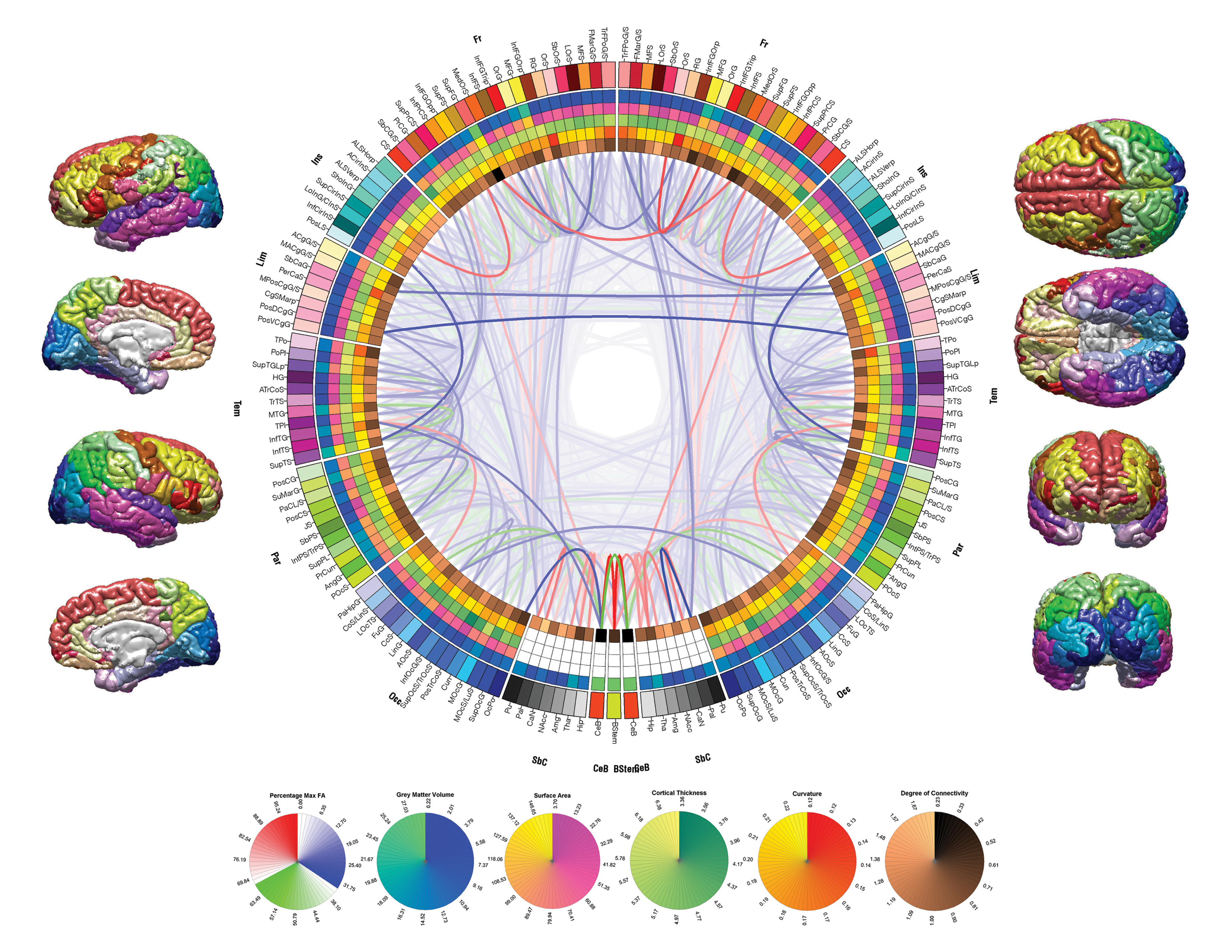 Human Brain Mapping Mapping Morphometry and Connectedness of the Human Brain | The  Human Brain Mapping