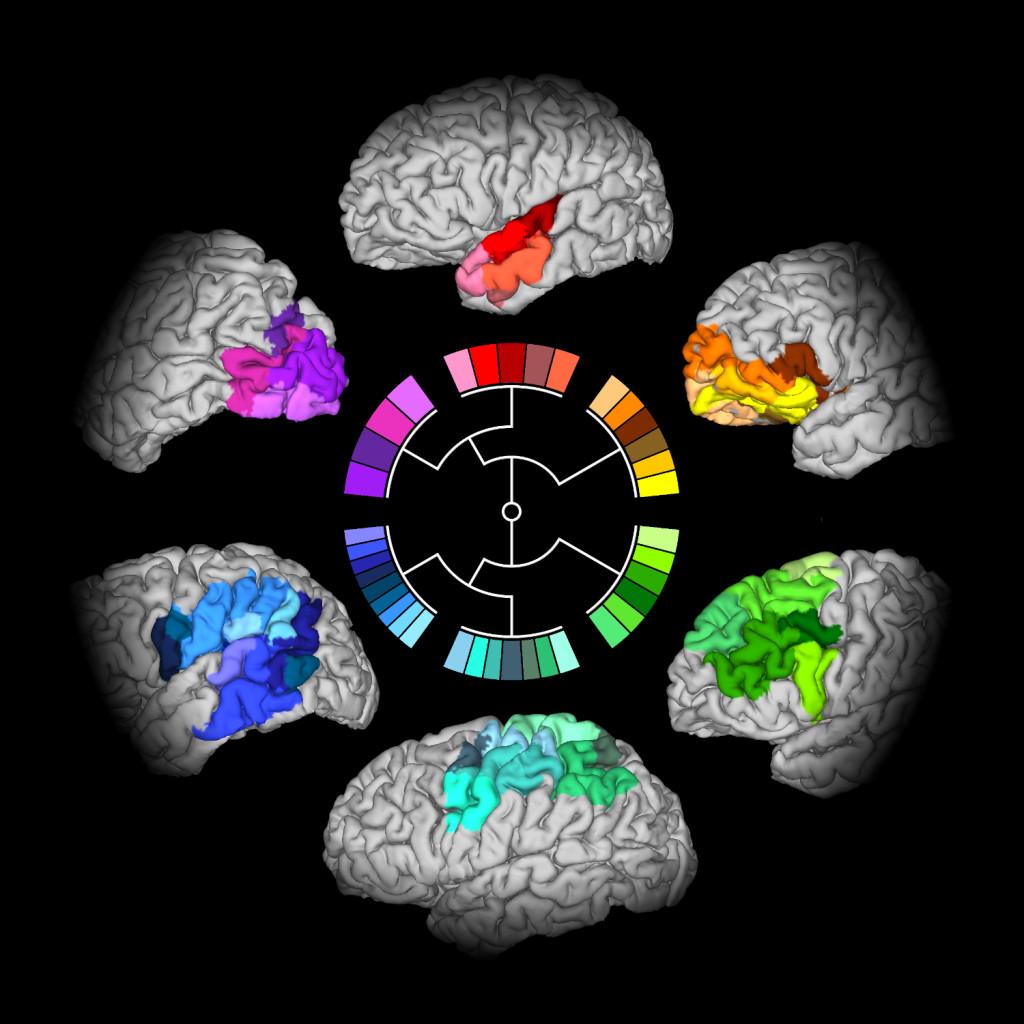 David Moreno-Dominguez Max Planck Institute for Human Cognitive and Brain Sciences